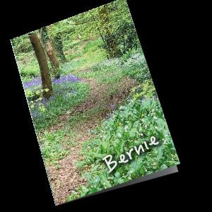 P202-Path-through-the-woods
