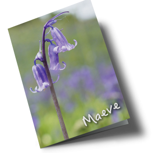 P303-Bluebell-Front